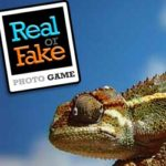 REAL OR FAKE Photo Game