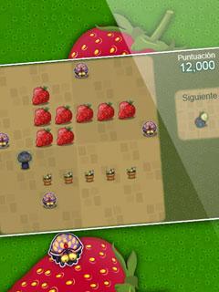 Imagen Berry Bug